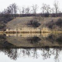Природа..после зимы ,,,,, :: Олег
