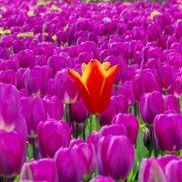 Что-то весны захотелось! :: Ирина Нафаня