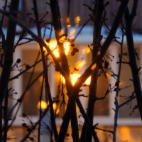 Последние лучи солнца :: Z. Cat
