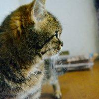 Китичка :: Света Кондрашова