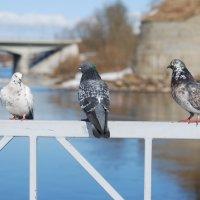три друга :: linnud