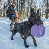 пёс :: Олег