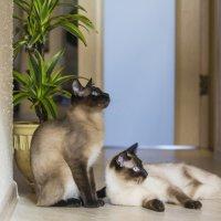 Коты отдыхают :: Андрей Исаев