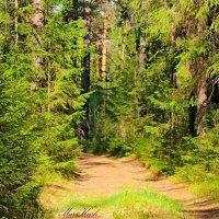 Лес – добрый огромный гигант... :: Mari Kush
