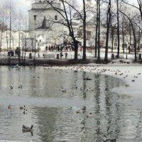 Птичий курорт :: Ольга Кривых