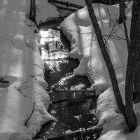 пробуждение лесного ручья :: Сергей Цветков