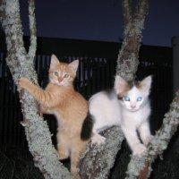 Коты растут на деревьях :: Евгений В