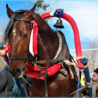Добрая лошадиная душа.. :: Андрей Заломленков