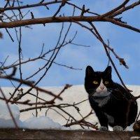 Мартовский кот! :: Tatiana Lesnykh Лесных