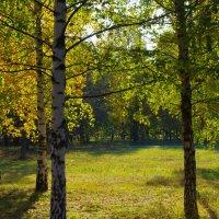 Солнечные листья. :: Александр Атаулин