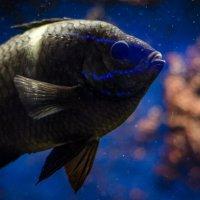 Рыба :: Валерий Кокин
