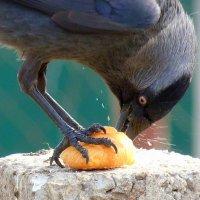 аппетит- долбит, аж крошки-щепки летят!!! :: Александр Прокудин