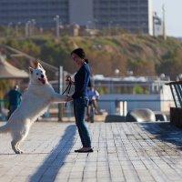 собаки 1 :: Михаил Дорошенко