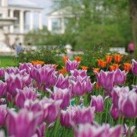 цветы :: Рома Григорьев