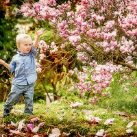 Магнолии в цвету! :: Ирина Слайд