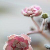Весна на подоконнике! :: Irina Fabien