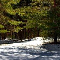 Ещё здесь влавствует февраль... :: Лесо-Вед (Баранов)