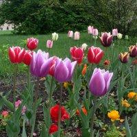 Весна. :: Светлана Ларионова