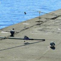 пернатые рыбаки :: Александр Прокудин
