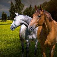 2 лошадки :: Михаил Власов