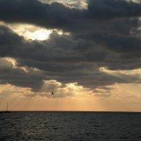 Чайка над морем :: Руслан Сасонов