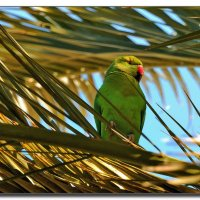 В пальмовых ветвях. :: Leonid Korenfeld