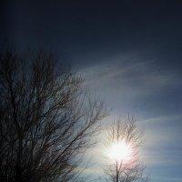 Солнышко в ветвях :: Лариса Чудиновских