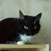 Кошка Глафира. По знаку зодиака Скорпион. :: Светлана Калмыкова