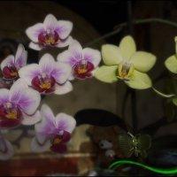 Орхидейки :: Василиса Никитина