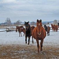 Мои кони, мои скакуны...))) :: Владимир Хиль