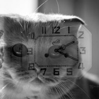 время котов :: Татьяна Исаева-Каштанова