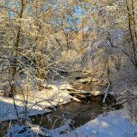 Лесной уголок, освещённый солнцем :: Милешкин Владимир Алексеевич