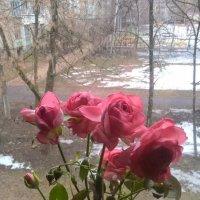 В доме цветы, а за окном март :: Елена Семигина