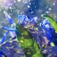 Звездный дождик :: Viktoriya Bilan