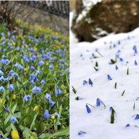 Весна вчера и сегодня... :: Мария Климова