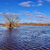 Затопила. :: Валера39 Василевский.