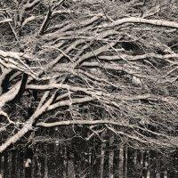 В зимнем парке :: Александр Юдин