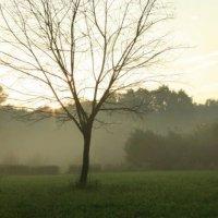 золотой час, дерево в парке на фоне леса в тумане :: Влада Павлова