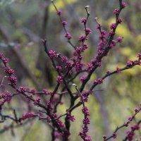весна идет :: Елена Константиниди