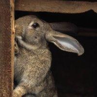 Кролики :: Алёна Найдёнова