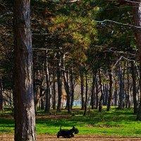 Там на неведомых дорожках следы невиданных зверей; … :: Александр Корчемный