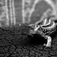 В гостях у дракона :: Сергей Русаков