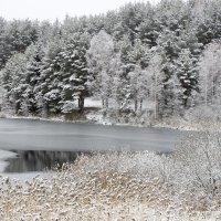 Морозное утро :: Андрей Костров