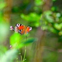 Butterfly :: D. Matyushin.