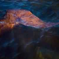 Сибирская русалка :: Kira Den