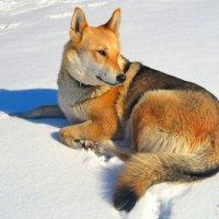 Собака - друг человека! :: Милешкин Владимир Алексеевич