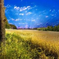 пшеница :: Алексей Носков