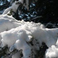 Весна в ЕАО :: Natusya 89