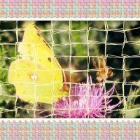 мозаика лета :: tgtyjdrf