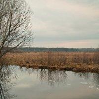 Весна в Полесье. :: Андрий Майковский